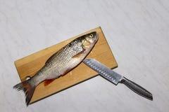 Os peixes de água doce crus na cozinha embarcam, entregam, faca, escalas, aletas, Fotos de Stock
