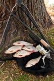 Os peixes de água doce e as varas de pesca de travamento com pesca bobinam Fotos de Stock Royalty Free
