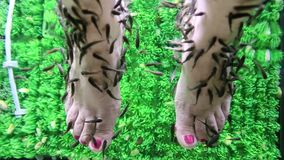 Os peixes de Garra Rufa limpam a epiderme dos pés da mulher vídeos de arquivo