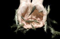 Os peixes de Garra Rufa removem a pele Imagem de Stock Royalty Free