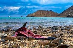 Os peixes desperdiçam na praia Imagem de Stock Royalty Free