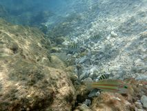 Os peixes diferentes aproximam os corpos corais Fotografia de Stock Royalty Free