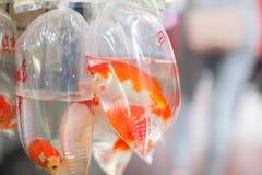 Os peixes dourados e os peixes diferentes para o aquário em uns sacos de plástico penduraram na parede em uma loja de animais de  foto de stock