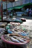 Os peixes frescos. Imagem de Stock