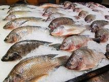 Os peixes frescos que refrigeram no gelo, peixes frescos venderam em um mercado imagens de stock