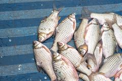 Os peixes frescos são vendidos no mercado de peixes foto de stock royalty free