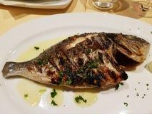 Os peixes grelhados chamaram Dorade fotografia de stock royalty free