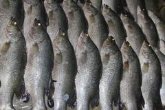 Exposição dos peixes Fotos de Stock Royalty Free