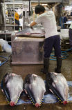 Os peixes massacram no mercado de Tsukiji Foto de Stock Royalty Free