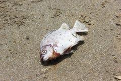 Os peixes morrem estilo do vintage Foto de Stock Royalty Free
