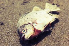 Os peixes morrem estilo do vintage Imagens de Stock Royalty Free