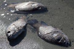 Os peixes morrem fora Fotografia de Stock Royalty Free