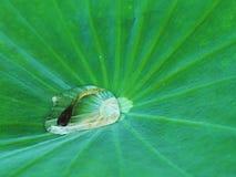 Os peixes na gota da água Imagens de Stock