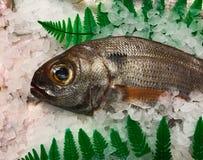 Os peixes prepararam-se para ser vendidos no mercado imagem de stock royalty free