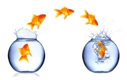 Os peixes saltam fotos de stock royalty free