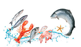 Os peixes saltam com watersplash Imagem de Stock