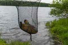 Os peixes - tencas na gaiola Imagem de Stock Royalty Free