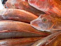 Os peixes vermelhos do bacamarte apresentaram aos clientes em um mercado dos peixes Imagens de Stock Royalty Free