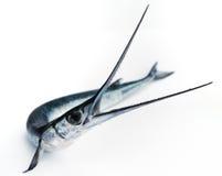 Os peixes viram Imagem de Stock