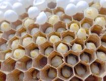 Os pentes da abelha com ovos da abelha fecham-se acima foto de stock
