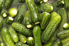 Os pepinos verdes lavam na água como um fundo Foto de Stock