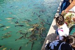 Os peregrinos e os turistas alimentam a carpa do koi Fotografia de Stock