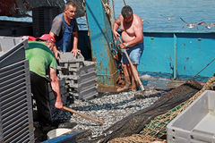 Os pescadores descarregam a captura do arenque pequeno O Mar Negro Fotografia de Stock