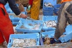Os pescadores entregam o prendedor de peixes de trabalho na plataforma de barco Fotos de Stock Royalty Free