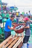 Os pescadores estão aterrando o atum dos barcos de pesca ao mercado Fotos de Stock Royalty Free