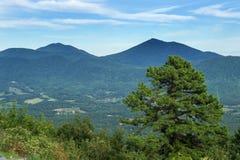 Os picos da lontra Foto de Stock Royalty Free