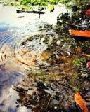 Os pingos de chuva caem na água, apresentando gotas bonitas da água imagens de stock royalty free