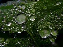 Os pingos de chuva na planta esverdeiam a folha em uma imagem preto e branco fotos de stock