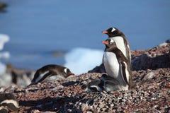 Os pinguins da Antártica foto de stock royalty free
