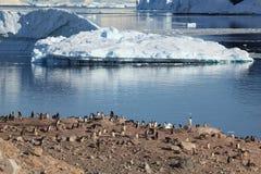 Os pinguins da Antártica fotografia de stock royalty free