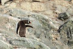 Os pinguins da Antártica foto de stock