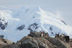 Os pinguins da Antártica imagem de stock