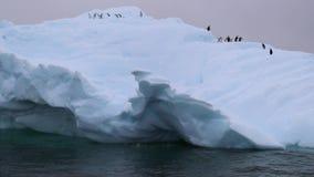 Os pinguins escalam a inclinação da geleira vídeos de arquivo