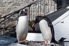 Os pinguins estão estando na luz do sol imagem de stock royalty free