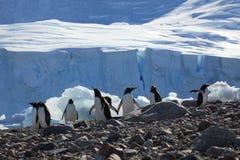 Os pinguins na Antártica fotografia de stock