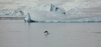 Os pinguins na Antártica imagens de stock