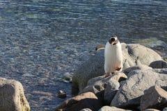 Os pinguins na Antártica imagem de stock royalty free