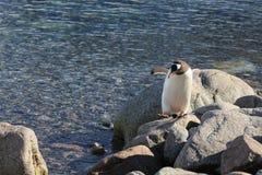 Os pinguins na Antártica fotos de stock royalty free