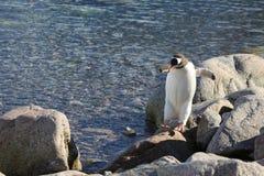 Os pinguins na Antártica imagens de stock royalty free