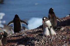 Os pinguins na Antártica foto de stock