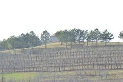 Os pomares no meio do inverno em um dia claro foto de stock