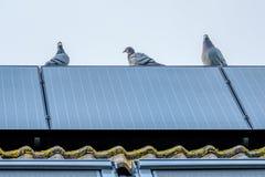 Os pombos de direção apreciam a vista de um painel solar fotografia de stock royalty free