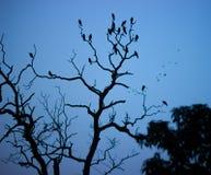 Os pombos mostram em silhueta jardins de Lodhi fotos de stock