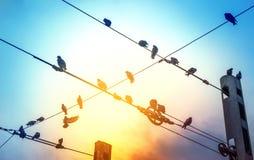 Os pombos no fio, um pombo voam à liberdade, curso o conceito da liberdade fotografia de stock