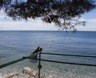 Os pombos no mar Imagem de Stock