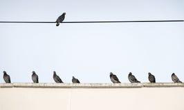 Os pombos sentam-se de lado a lado no telhado da casa na manhã Fotos de Stock